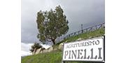 Agriturismo Pinelli, Plataci CS